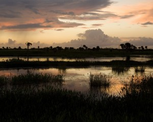 Photo courtesy of Charlie Corbeil A Viera Sunrise